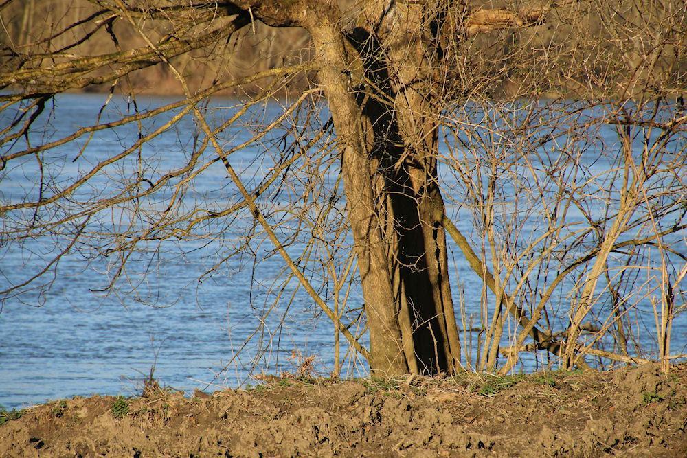 Bonne cachette à Mosnes   21 02 2014