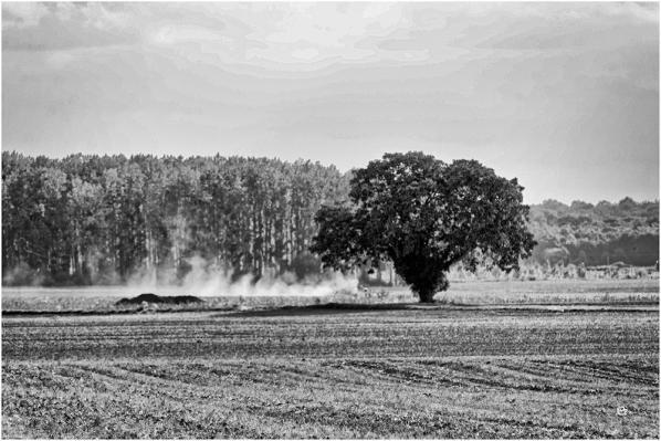 C7 - Arbre à Pontlevoy