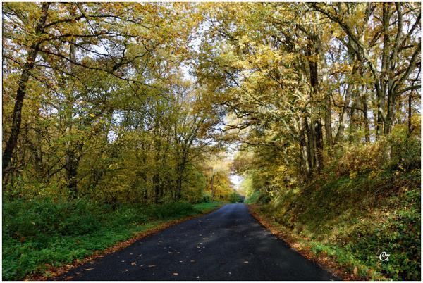 C7 - Couleurs d'automne à Mosnes