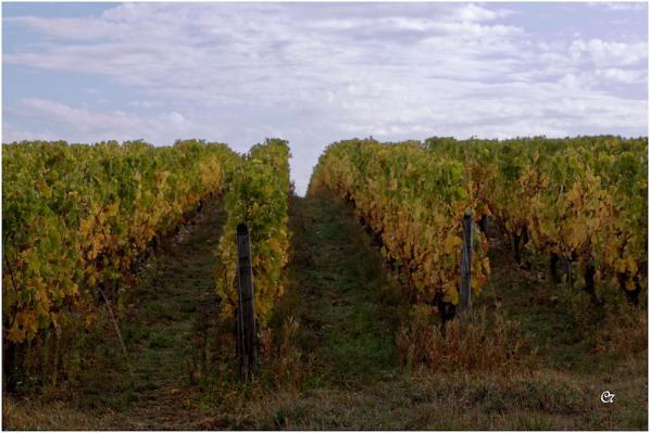 C7 - La vigne en automne