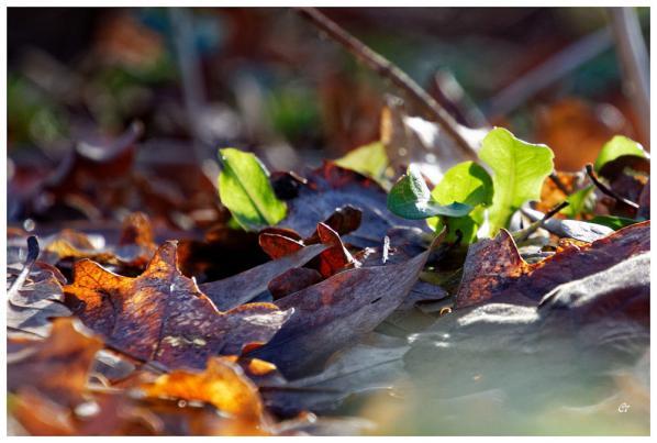 Mauricette Giraut - Tapis de feuilles